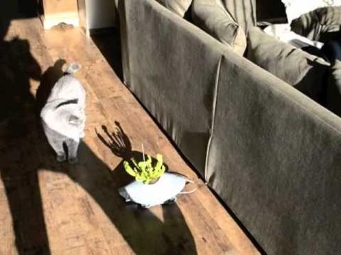La maceta sigue al sol Plant Host Drone